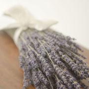 Dried English lavender