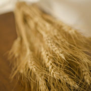 Dried golden bearded wheat