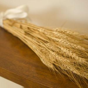 Dried golden bearded wheat
