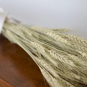 Dried green bearded wheat