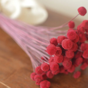 Preserved red button flowers