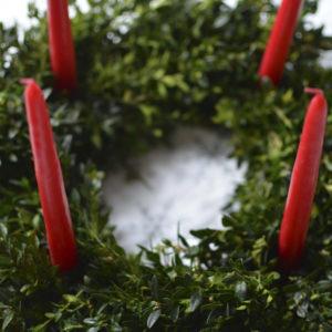 Fresh boxwood Advent wreath